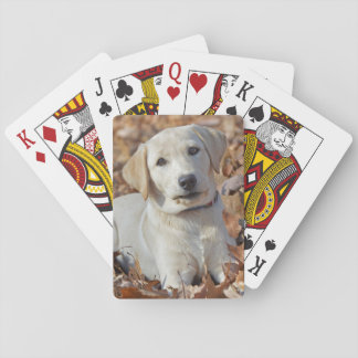 Yellow Labrador Retriever Puppy Playing Cards