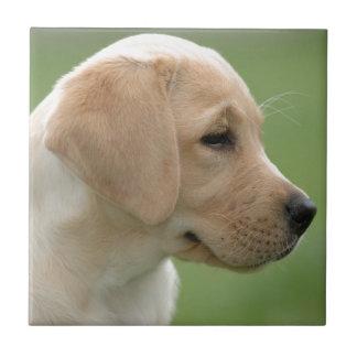 Yellow labrador retriever puppy tile
