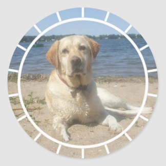 Yellow Labrador Retriever Stickers