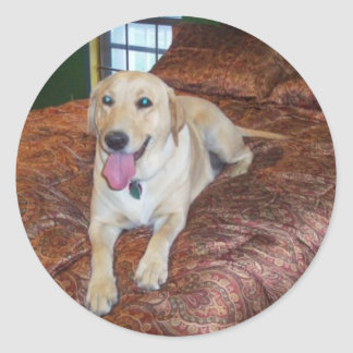 YELLOW LABS CLASSIC ROUND STICKER