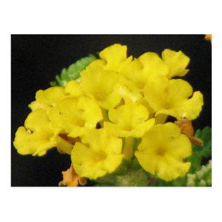 Yellow Lantana Postcard