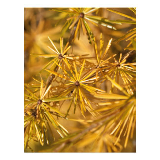 Yellow larch needles (Larix decidua) Letterhead