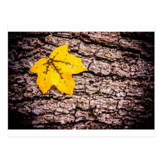 Yellow leaf against bark postcard