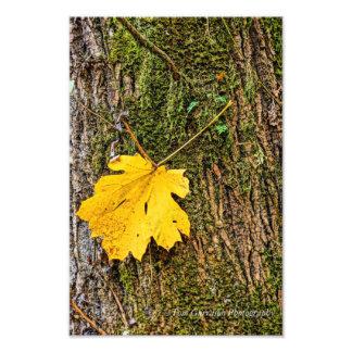Yellow Leaf Photo Print