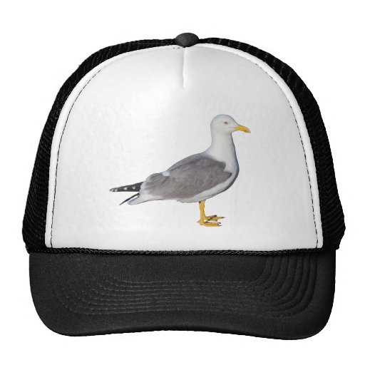 Yellow Legged Gull Mesh Hat