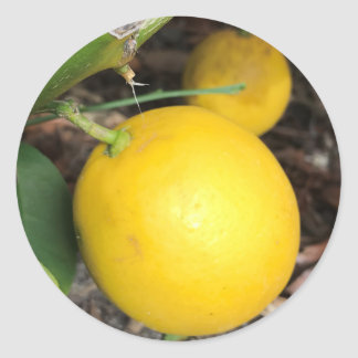 Yellow Lemons Classic Round Sticker