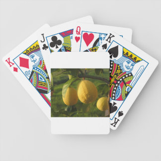 Yellow lemons growing on the tree at sunset bicycle playing cards