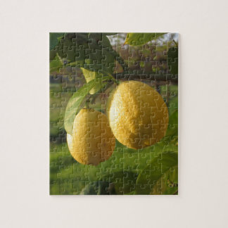 Yellow lemons growing on the tree at sunset jigsaw puzzle