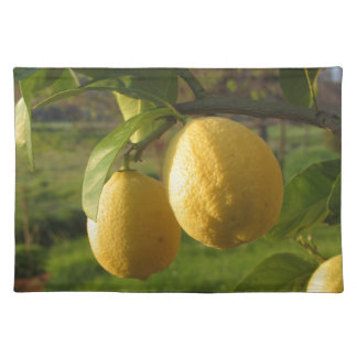 Yellow lemons growing on the tree at sunset placemat