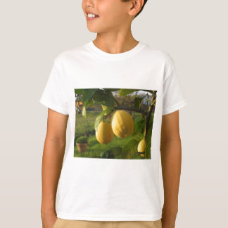 Yellow lemons growing on the tree at sunset T-Shirt