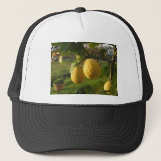 Yellow lemons growing on the tree at sunset trucker hat