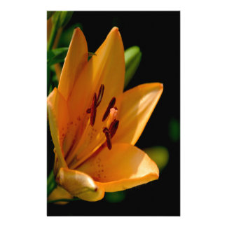 Yellow lilie daylily flower stationery paper