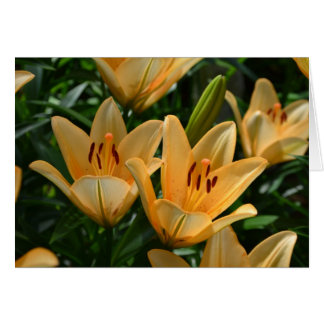 Yellow Lilly flowers Card
