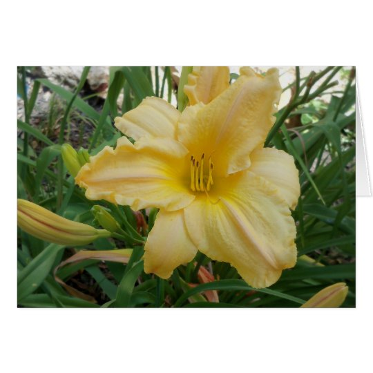 Yellow Lily  Stella d'oro Greeting Card