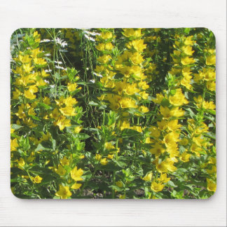 Yellow Loostrife and Daisies Mouse Pad