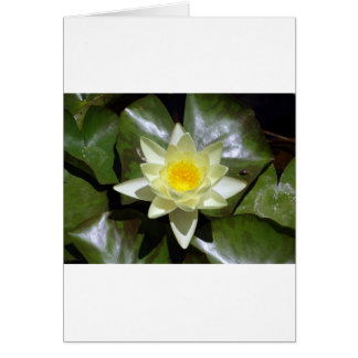 Yellow Lotus and lily pads Card