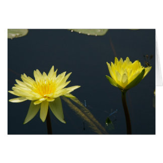 Yellow Lotus Waterlilies Card