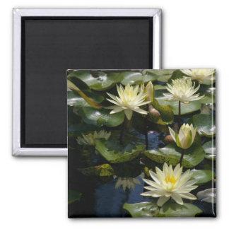 Yellow Lotus Waterlilies Magnet