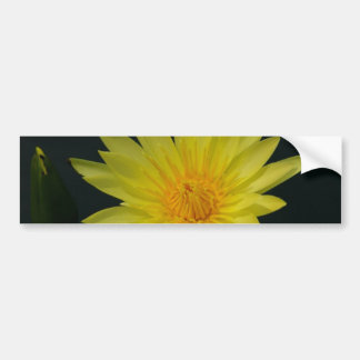 Yellow Lotus Waterlily Bumper Sticker