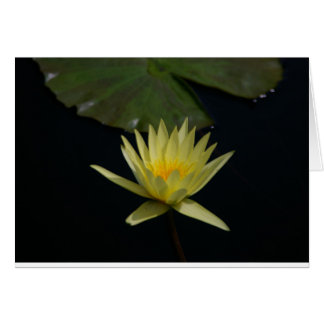 Yellow Lotus Waterlily Card