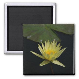 Yellow Lotus Waterlily magnet