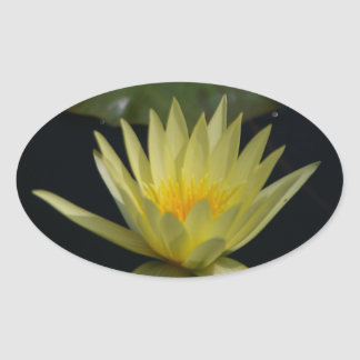 Yellow Lotus Waterlily Oval Sticker