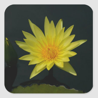 Yellow Lotus Waterlily Square Sticker