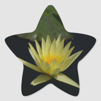 Yellow Lotus Waterlily Star Sticker