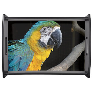 Yellow-macaw Serving Tray