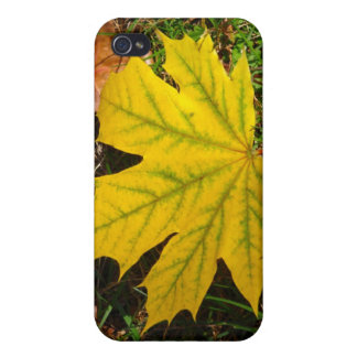 Yellow Maple Leaf iPhone 4 Cover