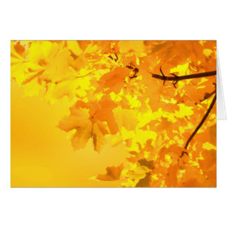 Yellow Maple Note Card