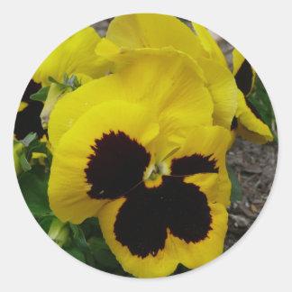 Yellow Mixed Pansy Classic Round Sticker