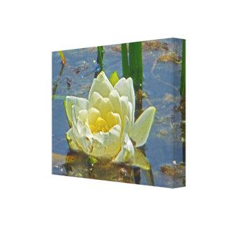 Yellow Nymphaea Alba Canvas Print