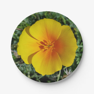 yellow of autumn paper plate