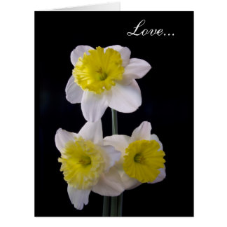 Yellow on White Daffodil Valentine's Card