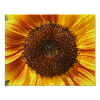 Yellow, Orange, and Brown Sunflower Poster