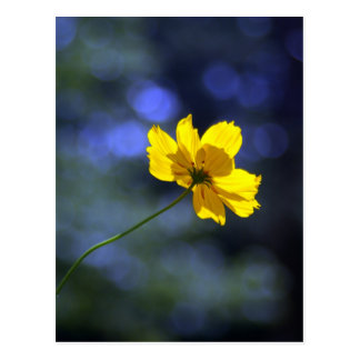Yellow Orange Coreopsis Postcard