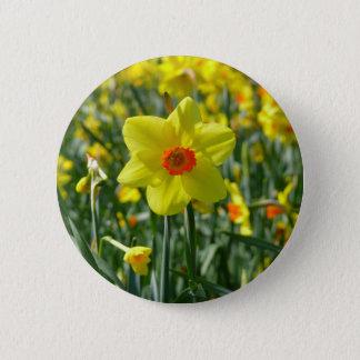 Yellow orange Daffodils 01.0.2 2 Inch Round Button