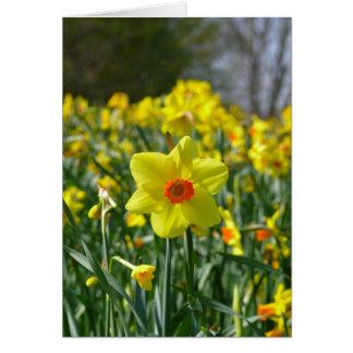 Yellow orange Daffodils 01.0.3.0 Card