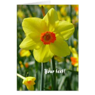 Yellow orange Daffodils 01.7.T Card