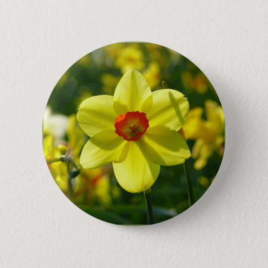 Yellow orange Daffodils 02.1g 2 Inch Round Button
