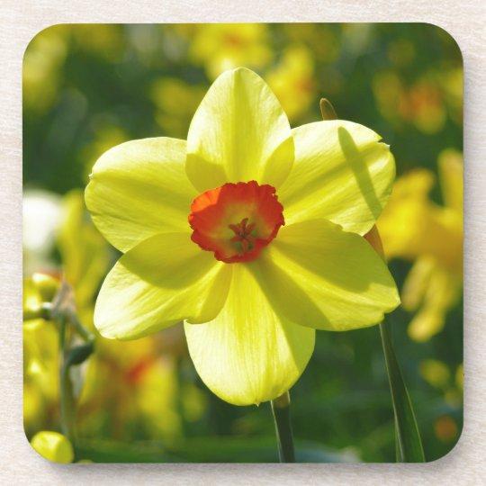 Yellow orange Daffodils 02.1g Beverage Coaster