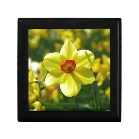 Yellow orange Daffodils 02.1g Gift Box