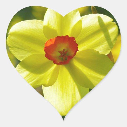 Yellow orange Daffodils 02.1g Heart Sticker