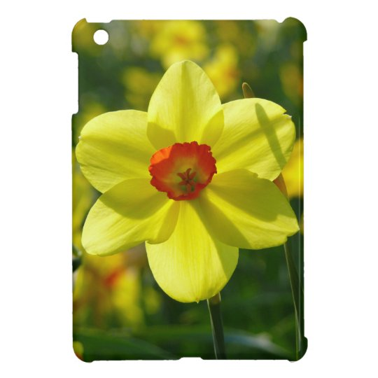 Yellow orange Daffodils 02.1g iPad Mini Cases