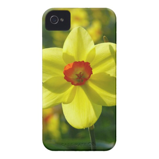 Yellow orange Daffodils 02.1g iPhone 4 Cases