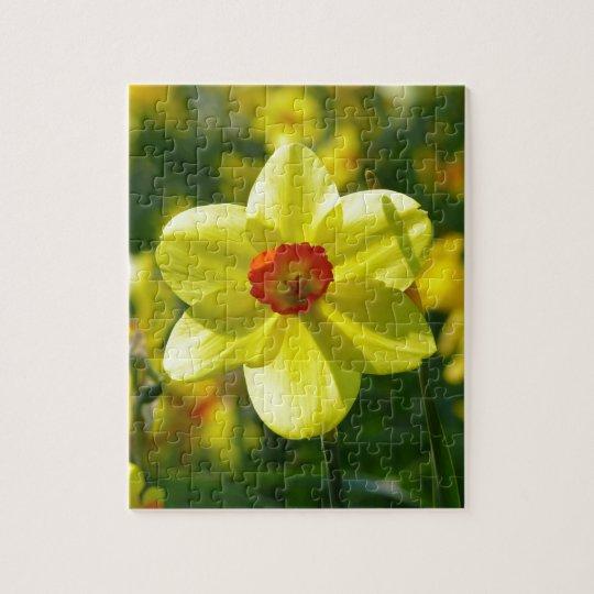 Yellow orange Daffodils 02.1g Jigsaw Puzzle