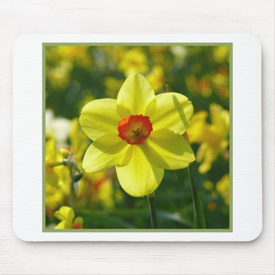 Yellow orange Daffodils 02.1g Mouse Pad