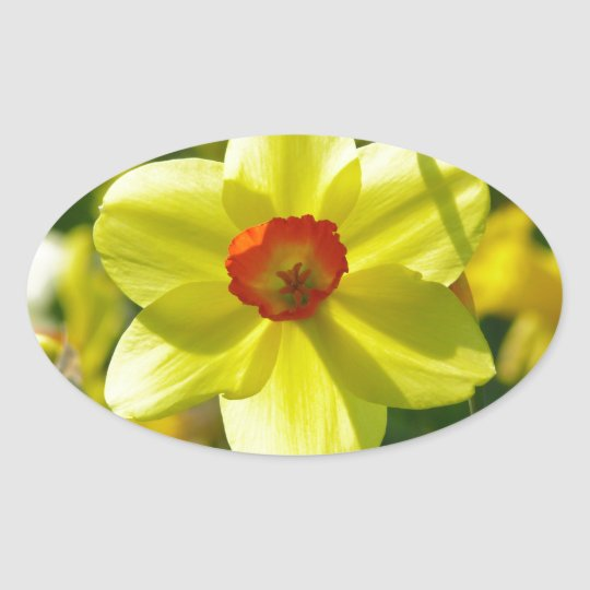 Yellow orange Daffodils 02.1g Oval Sticker