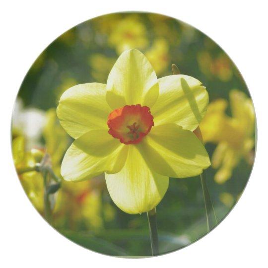 Yellow orange Daffodils 02.1g Plate